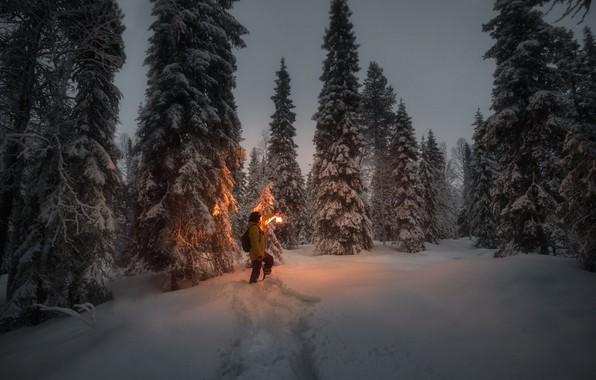 Картинка зима, снег, деревья, пейзаж, ночь, природа, человек, ели, фонарь, тропинка, Юрий Столыпин