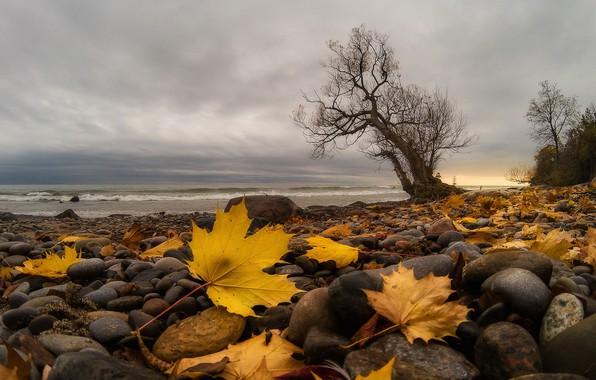 Картинка море, листья, берег