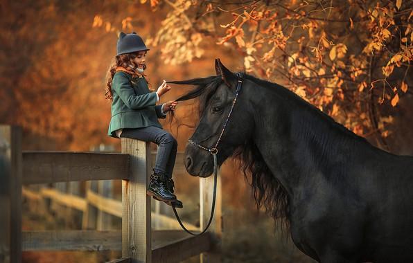 Картинка осень, взгляд, листья, свет, ветки, природа, поза, фон, дерево, настроение, конь, листва, черный, лошадь, доски, …