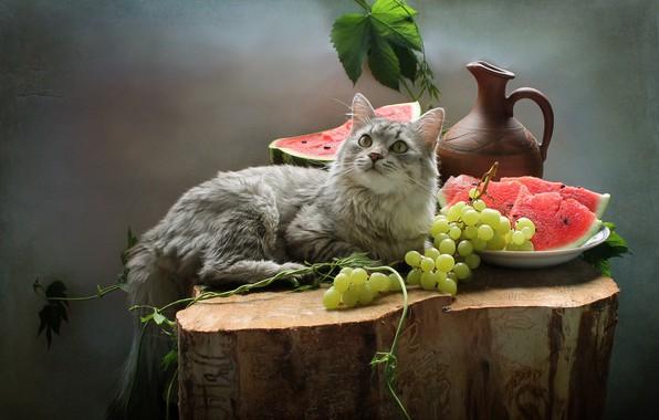 Картинка кошка, кот, ягоды, животное, пень, арбуз, виноград, кувшин, фрукты, натюрморт, Ковалёва Светлана