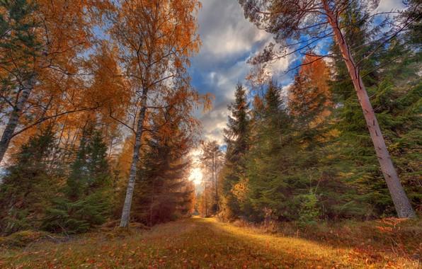 Картинка дорога, осень, лес, трава, листья, солнце, облака, свет, деревья, природа, парк, синева, стволы, поляна, листва, …