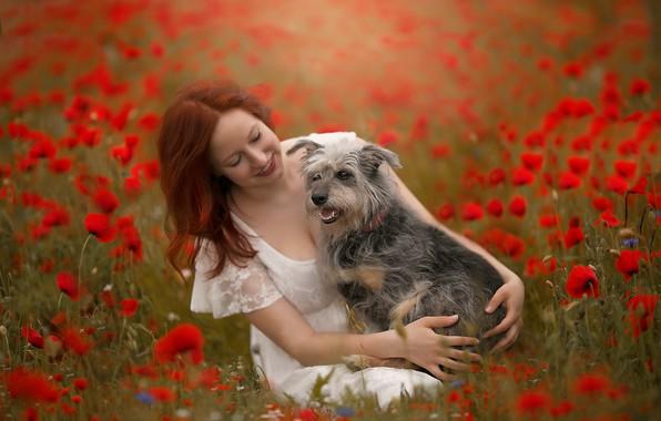 Картинка лето, девушка, маки, собака