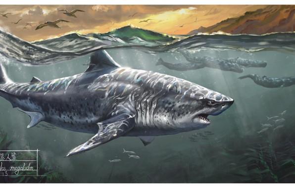 Картинка Shark, Whales, Megalodon
