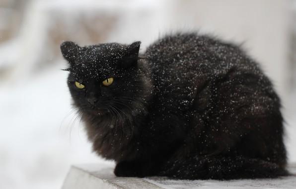 Картинка кот, снег, фон