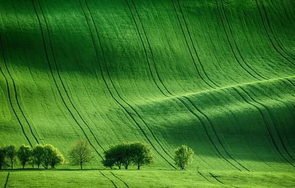 Картинка Nature, Green, Field, Trees, Meadow