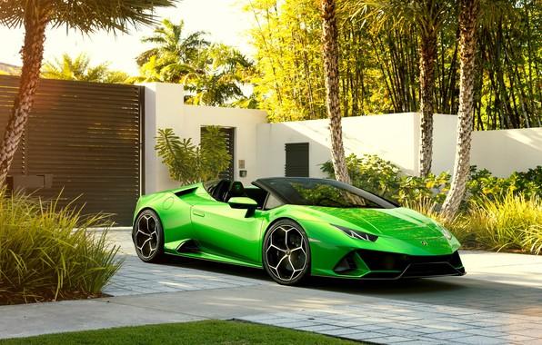 Картинка машина, пальмы, Lamborghini, спорткар, Spyder, Evo, Huracan