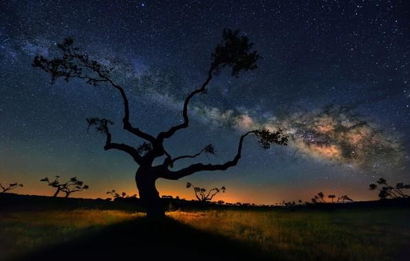Картинка небо, звезды, дерево, Млечный путь, sky, stars, tree, milky way