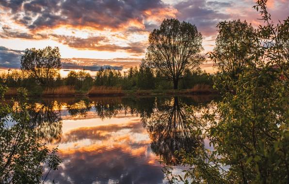 Картинка деревья, пейзаж, закат, природа, пруд, отражение, Владимир Васильев