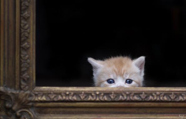 Картинка кошка, фон, рама