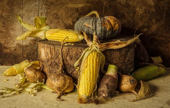 Картинка кукуруза, урожай, тыква, натюрморт, овощи, autumn, still life, pumpkin, corn, vegetables, harvest