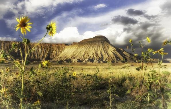 Картинка подсолнухи, пейзаж, цветы, природа, гора, красота