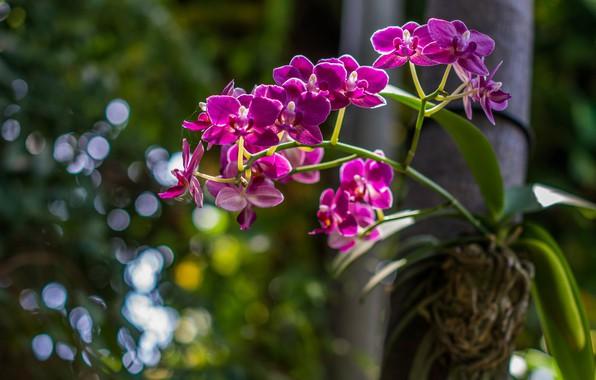 Картинка листья, свет, цветы, природа, темный фон, дерево, яркие, розовые, орхидеи, боке