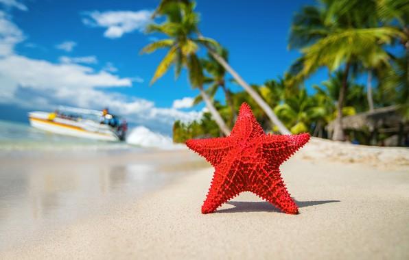 Картинка тропики, пальмы, океан, берег, звезда, тень, катер, Valentin Valkov