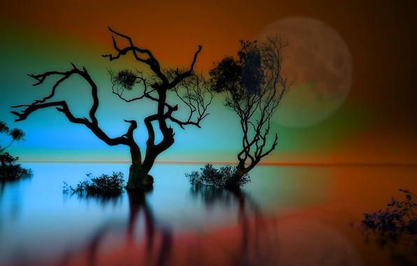 Картинка небо, вода, деревья, отражение, вечер