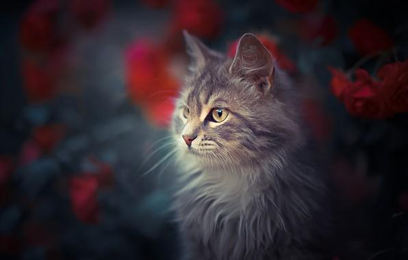 Картинка кошка, кот, цветы, портрет, мордочка, боке, котейка