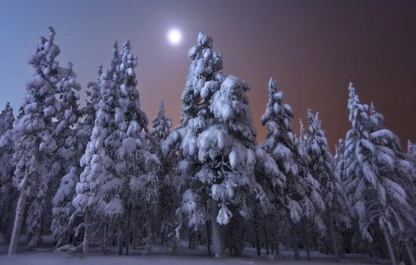 Картинка зима, лес, снег, деревья, пейзаж, ночь, природа, луна, ели, Финляндия, Andrey Chabrov