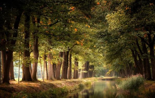 Картинка природа, парк, канал