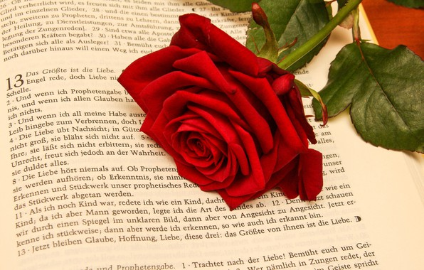 Картинка цветок, роза, Книга
