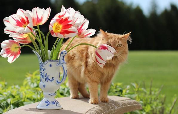 Картинка зелень, кошка, кот, взгляд, цветы, стол, поляна, букет, весна, рыжий, тюльпаны, ваза, натюрморт, бутоны, лужайка