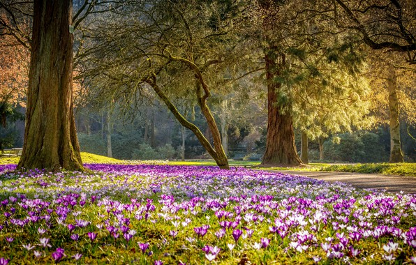 Картинка цветы, парк, весна