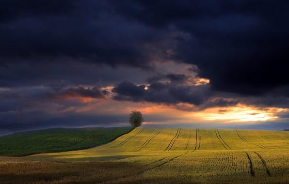 Картинка поле, лето, небо, природа