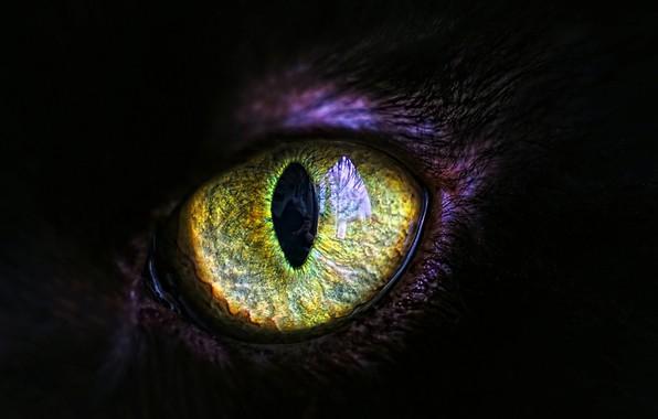 Картинка кошка, глаз, зрачок