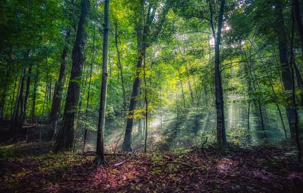 Фото обои зелень, лес, солнце, деревья, парк, США, лучи света, Michigan, Leelanau