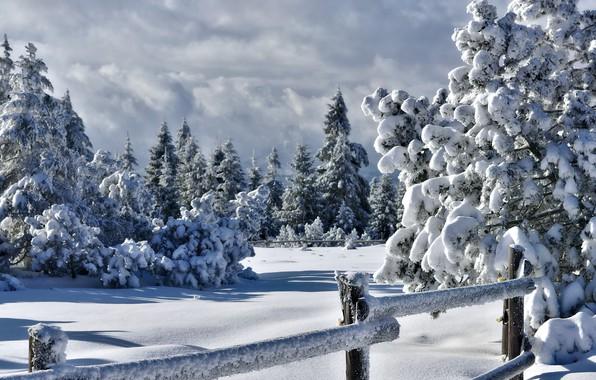 Картинка зима, снег, забор, ели