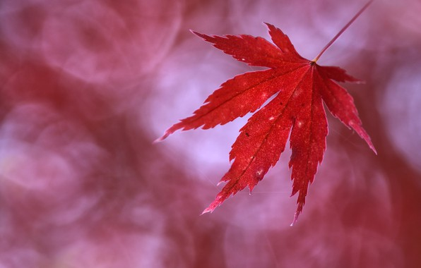 Картинка осень, лист, autumn, leaf, Anna Zuidema