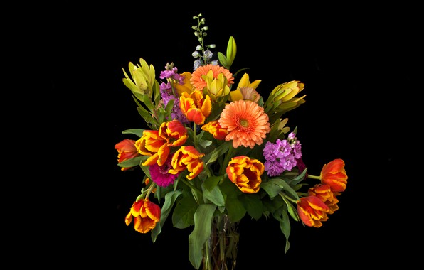 Картинка цветы, букет, тюльпаны, ваза, черный фон, герберы, левкой, маттиола