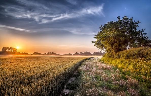 Картинка поле, лето, закат, туман