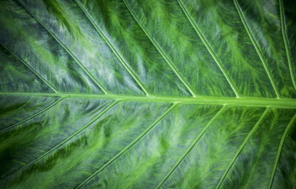 Картинка макро, лист, зеленый, фон, green, texture, macro, leaf