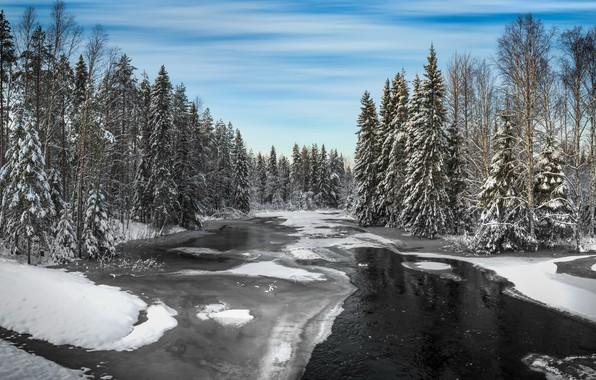Картинка зима, лес, река, Winter, river