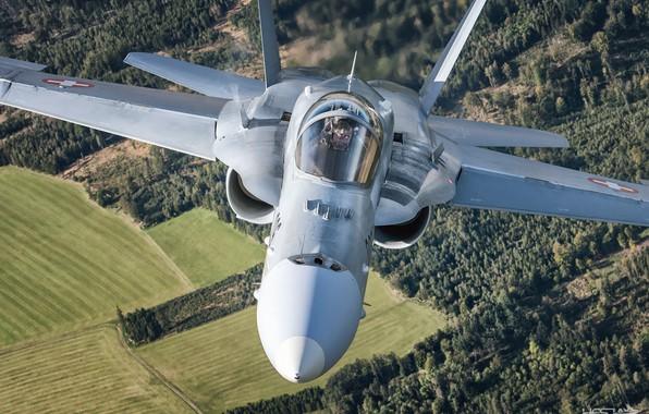 Картинка Поле, Лес, Истребитель, Пилот, ВВС Швейцарии, F/A-18 Hornet, Кокпит, ИЛС, HESJA Air-Art Photography