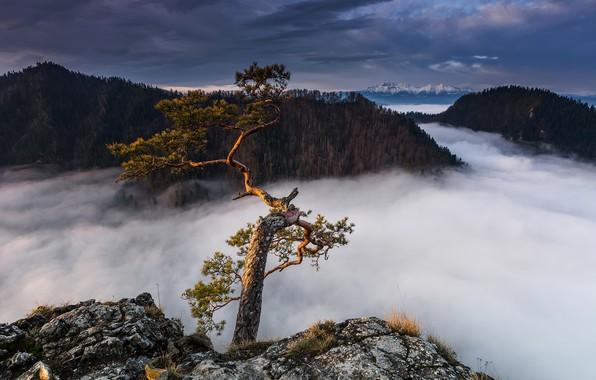 Картинка горы, туман, дерево