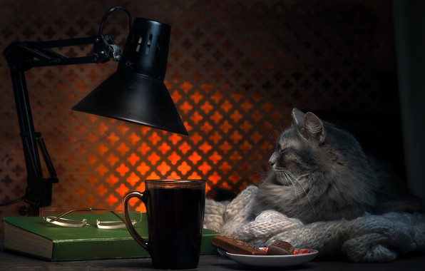 Картинка кот, свет, поза, уют, дом, темный фон, стол, серый, фон, комната, отдых, чай, лампа, кофе, …