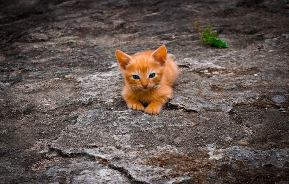 Картинка малыш, синие глаза, рыжий котёнок, кроха, на земле
