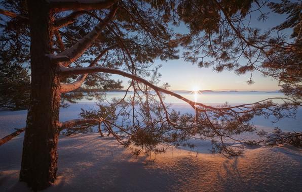 Картинка зима, снег, ветки, озеро, дерево, рассвет, утро, сугробы, Россия, сосна, Ладожское озеро