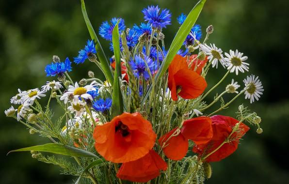 Картинка фото, Цветы, Ромашки, Маки, Букет, Васильки