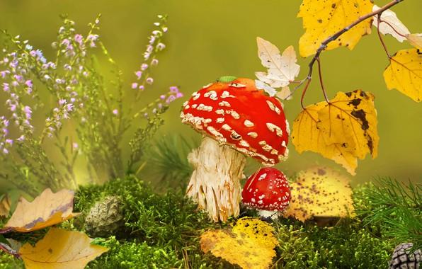 Картинка осень, трава, листья, макро, природа, грибы, мох, ветка, мухоморы, шишки, клоп, Vlad Vladilenoff