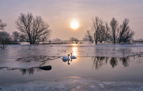 Картинка лед, зима, небо, солнце, свет, деревья, любовь, пейзаж, птицы, природа, озеро, пруд, отражение, река, ветви, …