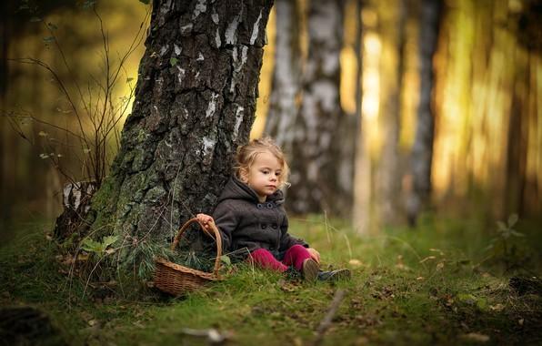 Картинка осень, лес, деревья, ветки, природа, стволы, корзина, девочка, хвоя, берёзы, малышка, ребёнок, Radoslaw Dranikowski