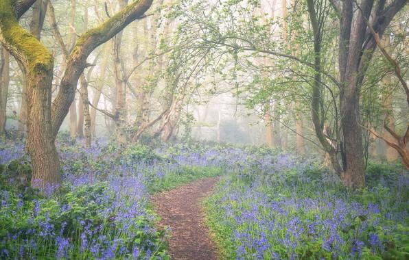 Картинка цветы, туман, весна