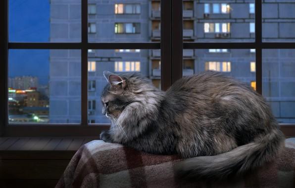 Картинка осень, кошка, кот, взгляд, стекло, город, огни, уют, дом, тепло, серый, отдых, рама, окна, окно, …