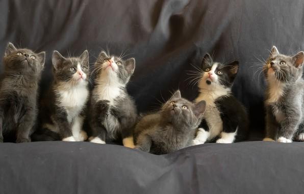 Картинка котята, kittens, Gert van den Bosch