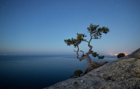 Картинка море, небо, пейзаж, природа, скала, дерево, звёзды, вечер, Крым, сосна, Новый Свет, Александр Плеханов