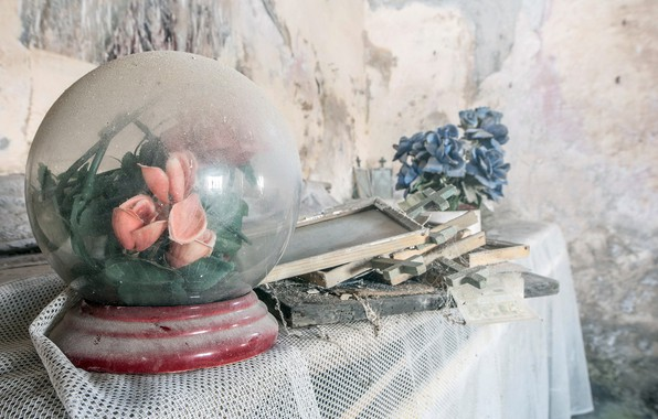 Картинка цветы, дом, пыль, натурализм