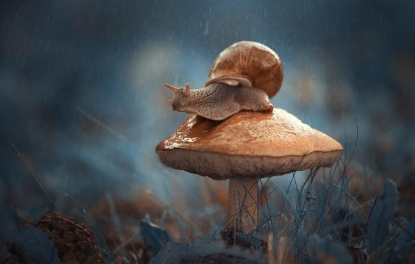Картинка макро, гриб, улитка