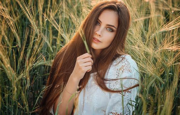 Картинка поле, взгляд, солнце, модель, портрет, макияж, платье, прическа, колосья, шатенка, красотка, в белом, на природе, …