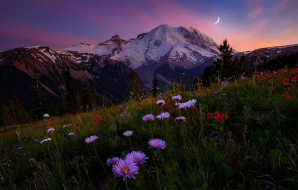 Картинка небо, цветы, горы, вечер, луг, Doug Shearer, гора Rainier